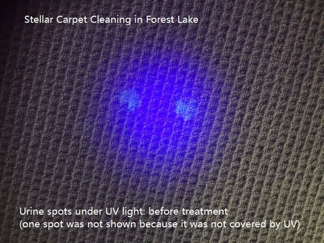 Urine spot on carpet before treatment